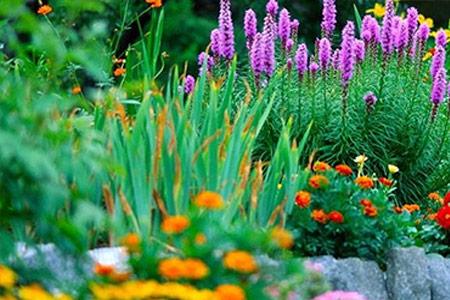 Botanical gardern Hacienda