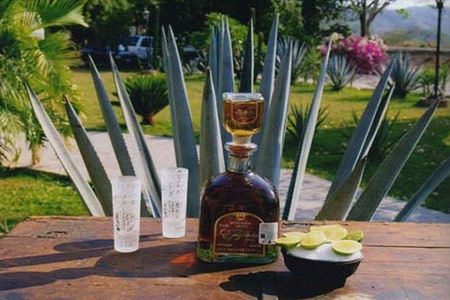 Tequila Tour Experience in Vallarta